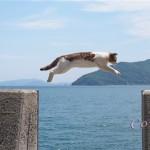 佐柳島の飛び猫