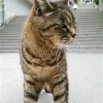 金比羅山の猫